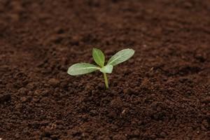 芽を出さない「枯れ種」社員をぐんぐん伸びるジャックと豆の木に変える技